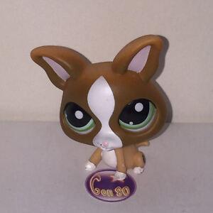 Littlest petshop chihuahua marron 1568 i50 chien dog pet - Chien pet shop ...