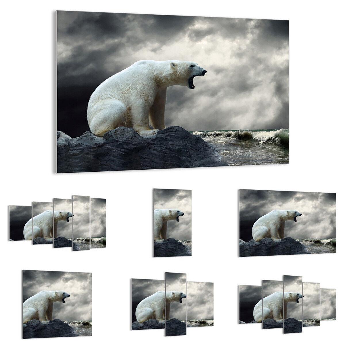 GLASBILD Wandbild Deko Bär Tiere Wasser Eis 2451 DE
