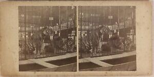 Cirque Circo Fleas Tigre Leone USA UK c1890 Foto Stereo Vintage Albumina n3