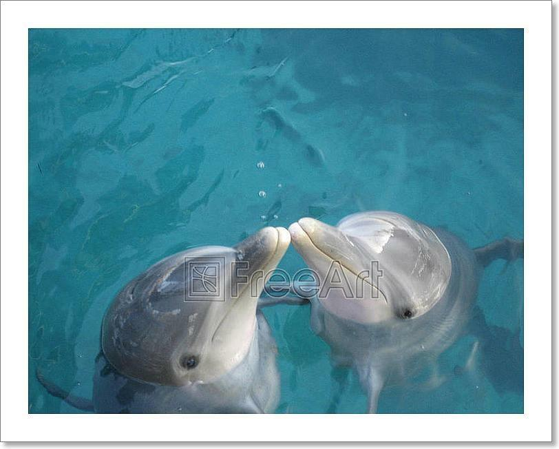 Kissing Dolphins Kunst Drucken Home Decor Wand Kunst Poster - G