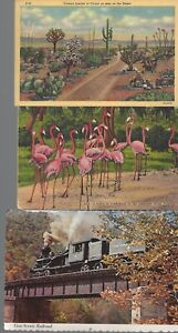Vintage-Scenic-Postcards-Circa-1800-039-s-1900-039-s-Lot-of-5-Pink-Flamingos