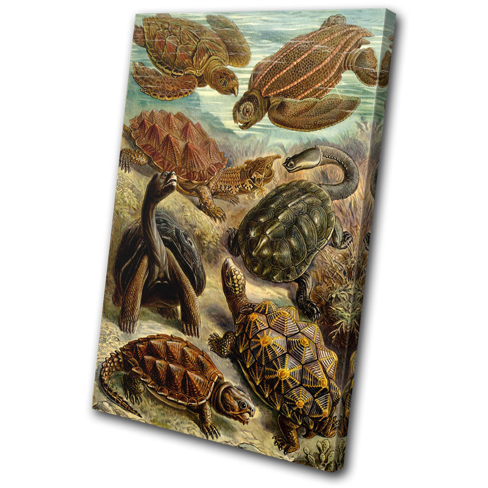 Botanical Turtles Sea Vintage Animals SINGLE TELA parete arte foto stampa