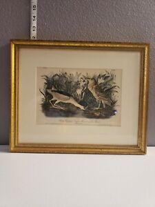 Vintage-Lithograph-John-James-Audubon-First-Edition-Black-Crowned-Night-Heron