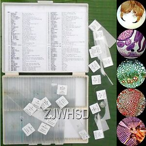100pcs Glass Prepared Basic Science Microscope Slides Sample Biology Pathology 791586157362
