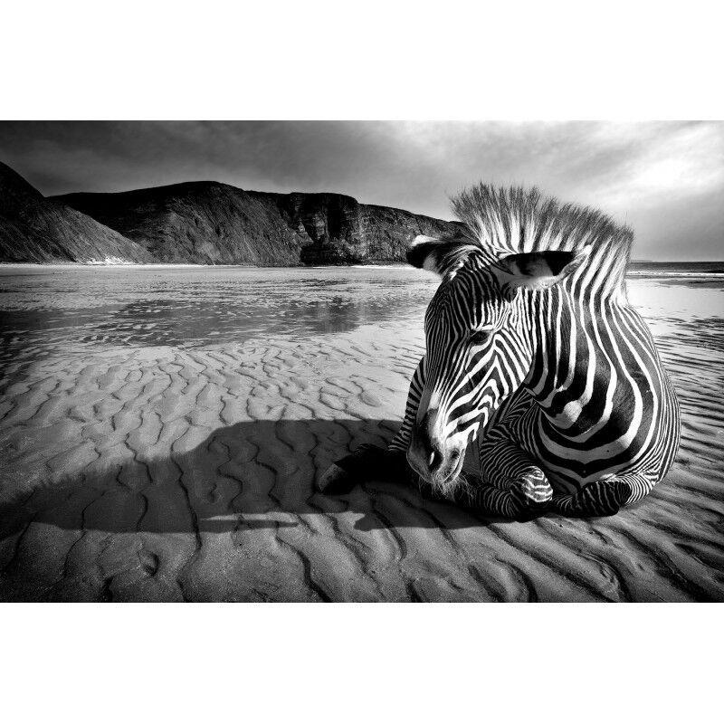 Quadro Stampa Stampa Stampa su Pannello in Legno MDF Zebra c61e6f