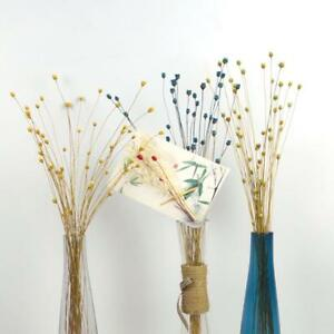 50pcs-Cute-Happy-Flower-Pressed-Dried-Flowers-Natural-Floral-Decor