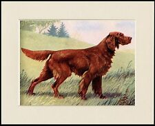 IRISH SETTER LOVELY STANDING DOG PRINT MOUNTED READY TO FRAME