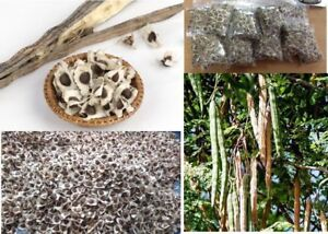 Moringa-Oleifera-Seeds-Finest-Organic-Quality-HAND-SELECTED