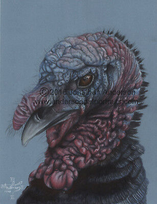 Turkey Close Up Original Colored Pencil Drawing By Jonathan Anderson Artist Ebay