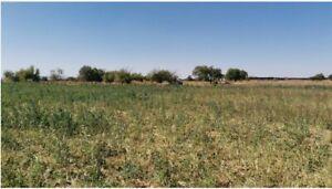 Venta de terreno campestre en Martinez Dominguez en Guadalupe Zacatecas