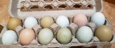 12 Rainbow Easter Egger Hatching Eggs Blue Eggers Green Eggers Olive Eggers
