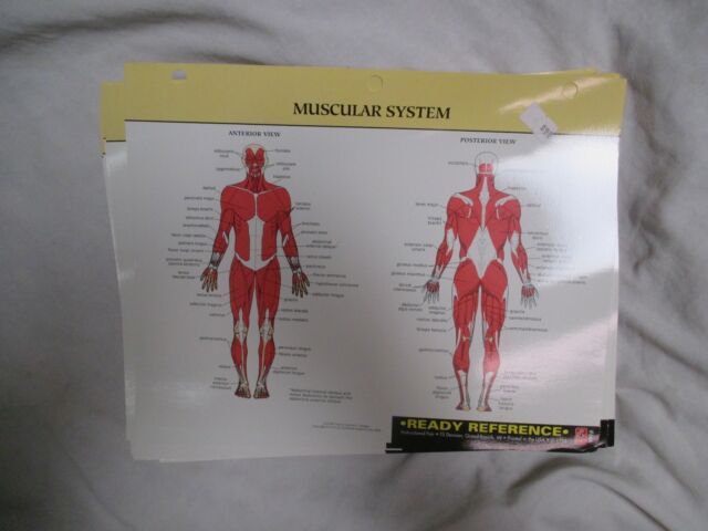 INSTRUCTIONAL FAIR READY REFERENCE CARDS: SKELETAL MUSCULAR, AND MORE SYSTEMS