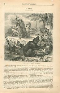 Brun-l-039-Ours-pris-au-Piege-Le-Renard-Poeme-par-Goethe-GRAVURE-ANTIQUE-PRINT-1860