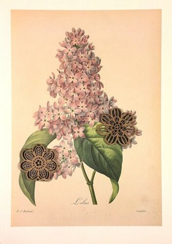 VTG Botanic Art Print Redoute Engraving Repro Purple Wildflowers *** SEE VARIETY