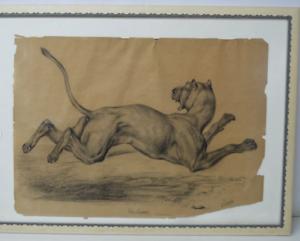 Grand dessin E. Saulais Lionne courant fusain début XIXe suiveur Victor Adam