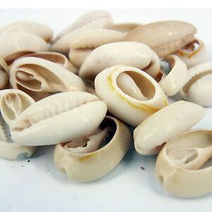 25x Medio Cauri Craft Conchas De Mar Para Manualidades Cuentas - Fotos-de-conchas-de-mar