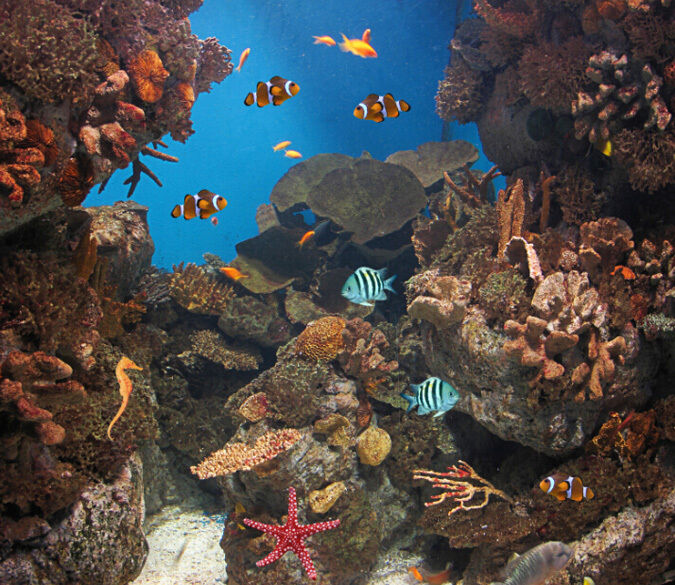 3D Corals Fishes 4 Wall Paper Wall Print Decal Wall Deco Indoor wall Murals Wall