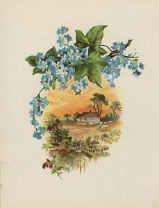 ANTIQUE FORGET ME NOTS FLOWER GREEN IVY HOUSE COTTAGE SHEEP COLOR OLD PRINT
