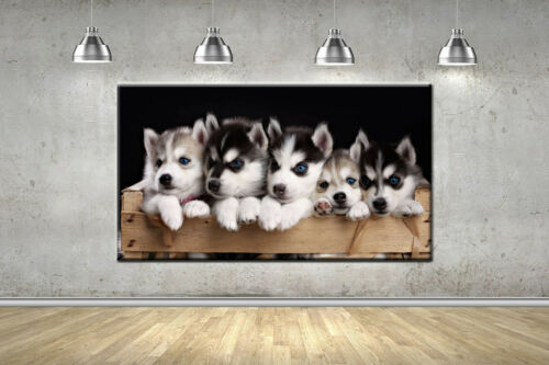 Baby Husky Dog Puppy Frame Canvas Photo Wall Art Picture Home Decor Poster