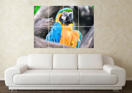 Large Macaw Blue Parrot Wild Bird Pet Wildlife Wall Poster Art Picture Print