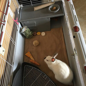 Guinea Pig Fleece cage liner pet bedding 3 layer hedgehog rabbit Midwest C & C