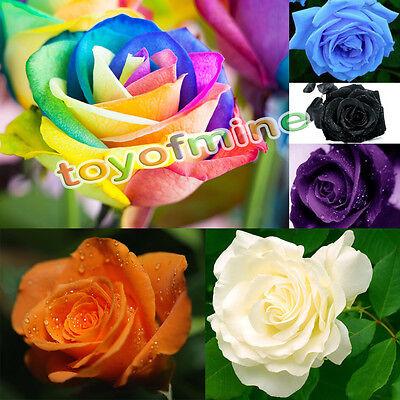 100 /200 Pcs Rare Multi-color Rainbow Rose Flower Seeds Garden Plants New