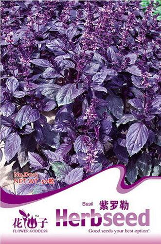 1 Pack 50 Seeds Chinese Herb Purple Sweet Basil Seed Ocimum Gratissimum D015