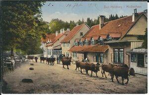 Ansichtskarte Bad Harzburg - Molkenhaus mit Passanten und Kühen - coloriert 1914
