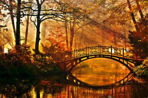 -Brücke Bäume Wald See Fluss Natur Pflanzen Wand 27V VLIES Fototapete-GARTEN-