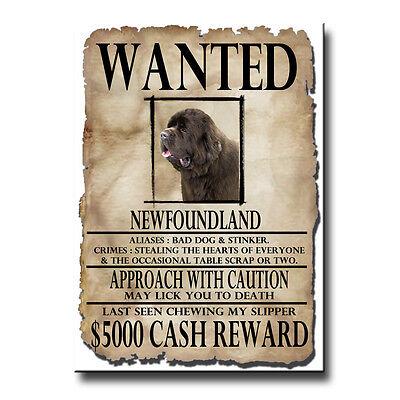 NEWFOUNDLAND Wanted Poster FRIDGE MAGNET No 1 Brown DOG