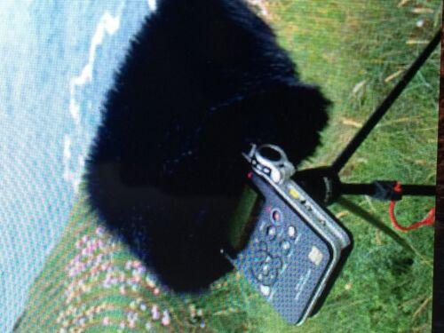 Windcut parabrisas se ajusta Movo WST-R30 en Sony PCM D100