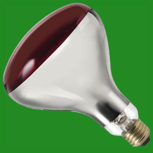 4x 250W R125 Infra Rouge Chaleur Lampe Rubis Finir Verre Rigide E27 Reptiles