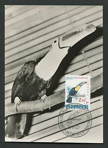 Belgique Mk 1962 Zoo Oiseaux Birds Toucan Maximum Carte Maximum Card Mc Cm D3870-afficher Le Titre D'origine