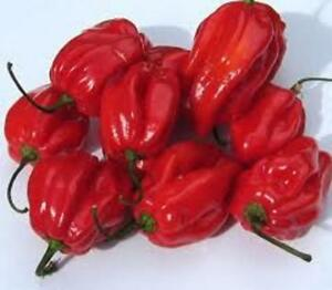 Heirloom-HABANERO-RED-Hot-Pepper-100-SEEDS-One-of-the-Hottest-Container-Garden