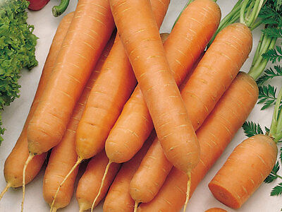 100 Carosello scopatizzo BARESE seeds samen korn vegetable garden orto