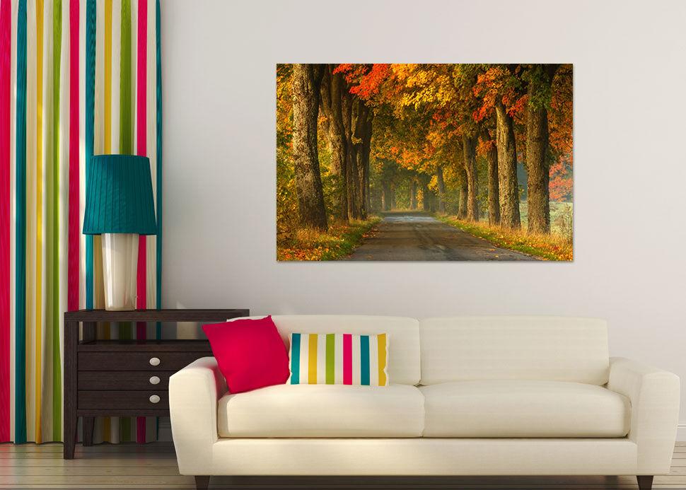 3D Breit  Ahorn  Holz Weg 8767  Fototapeten Wandbild BildTapete AJSTORE DE Lemon