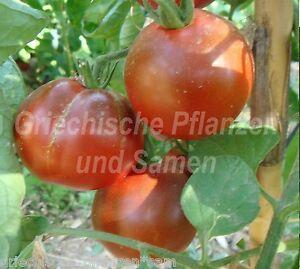 Heinz-Tomate-Pasta-Ketchup-Sossen-Tomaten-10-Samen