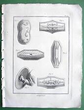 SHIELDS of Romans Germans Barbarians - 1804 Antique Print