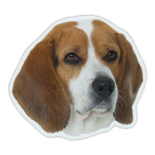 Magnetic Bumper Sticker Beagle Dog Breed Picture Magnet Cars, Trucks, SUVs