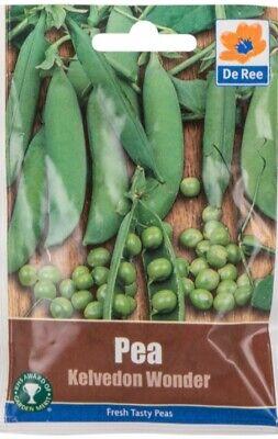 RHS Award of Merit PEA /'Kelvedon Wonder/' 40 seeds