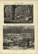 1878 Ransome Combined Steamer Tree Feller And Log Crosscut Saw