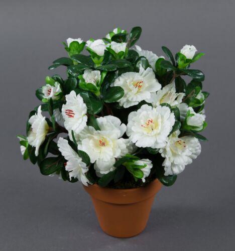 Azalee 24cm weiß im Topf LM Kunstpflanzen künstliche Blumen Kunstblumen