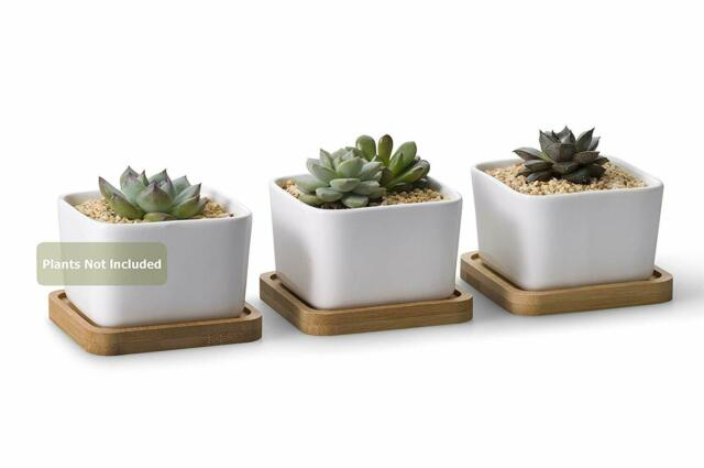 Opps 3 54 Inch White Ceramic Contemporary Square Design Succulent