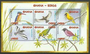 Ghana-Oiseaux-Martin-Pecheur-Guepier-Kingfisher-Birds-Eisvogel-Vogel-2002
