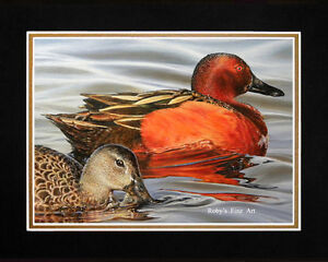 Matted-034-Cinnamon-Teal-034-Waterfowl-Duck-Print-8x10-Mat-by-Realism-Artist-Roby-Baer