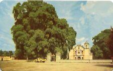 AK/Vintage postcard: MEXIKO: El Arbol del Tule, Oaxaca (~60er)