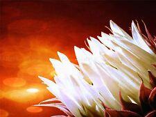 NATURE FLOWER WHITE PETAL ORANGE PLANT POSTER ART PRINT PICTURE BB121A