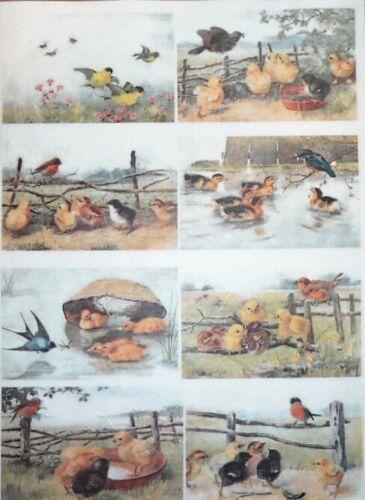 Rice Papers for DECOUPIS Scrapbook Artisanat Poulet Vintage OISEAUX 268