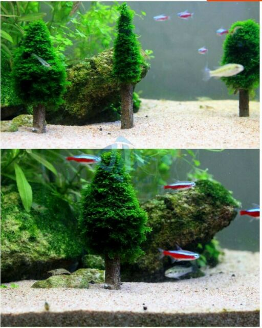 Aquarium Aquascaping Moss Tree Christmas Tree Fish Tank Decoration Ebay