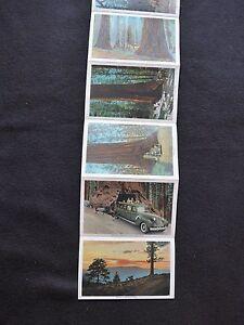 CPA Mariposa Grove of Big Trees California souvenir old postcard folder 18 vues - France - État : Occasion: Objet ayant été utilisé. Consulter la description du vendeur pour avoir plus de détails sur les éventuelles imperfections. ... - France